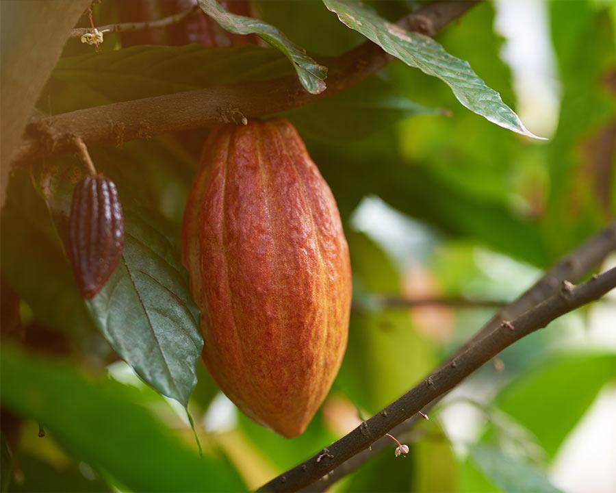 Schokocards Schokolade fairtrade UTZ Frucht
