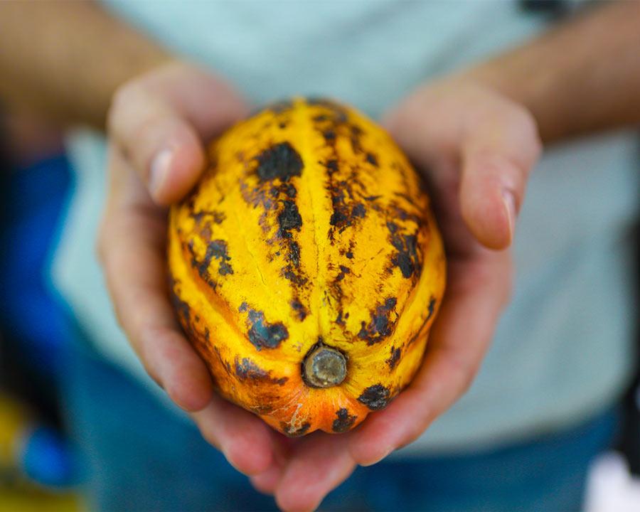 Schokocards Schokolade fairtrade UTZ Frucht in Hand