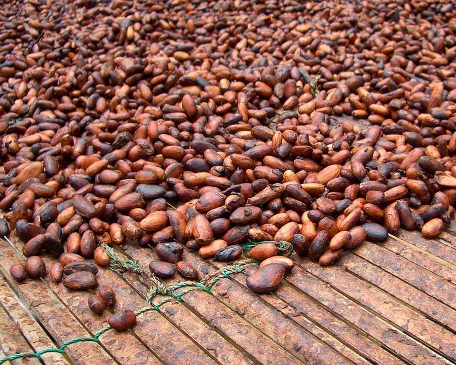 Schokocards Schokolade fairtrade UTZ Trocknung